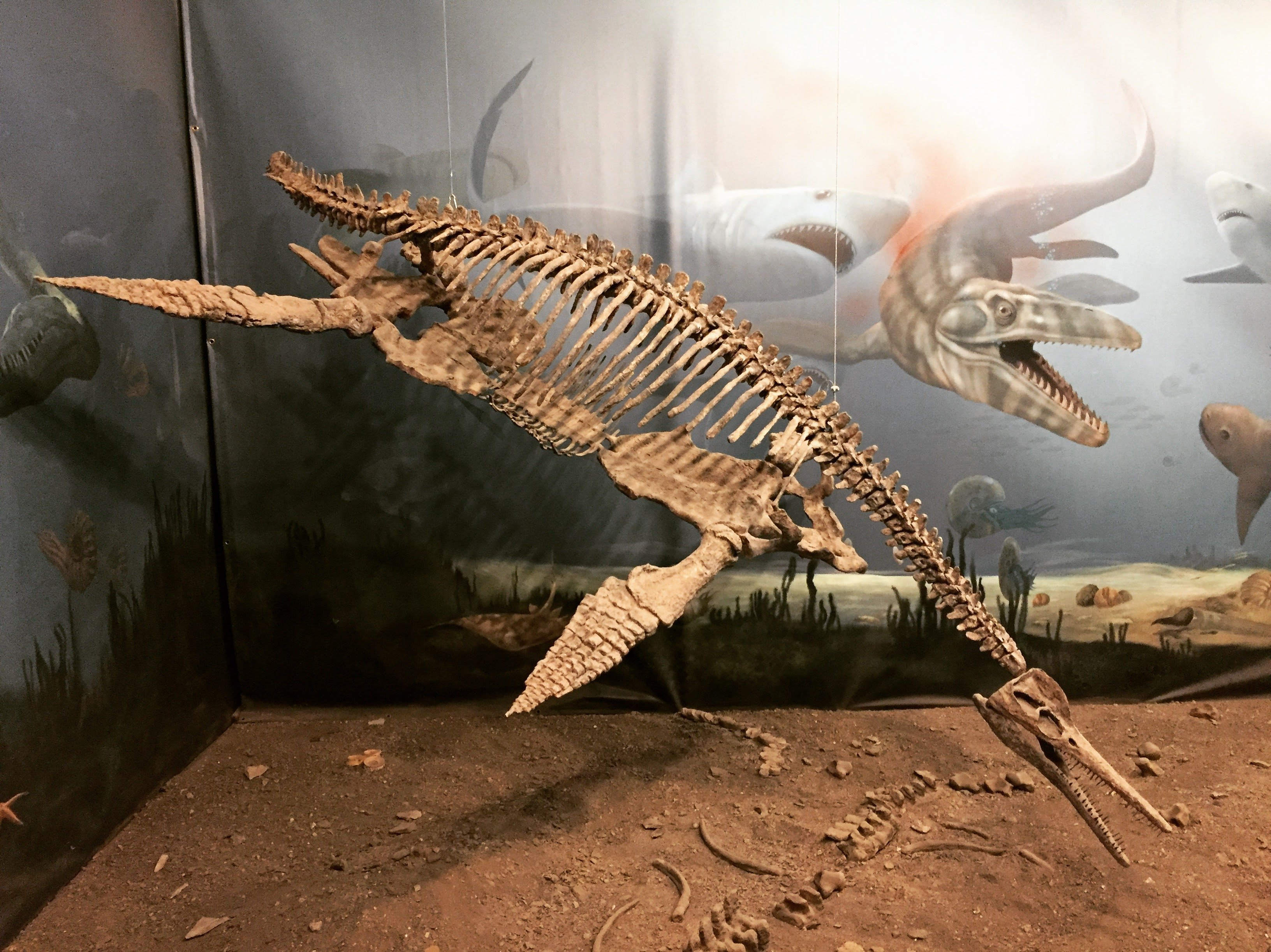CLOSED DUE TO CORONAVIRUS! Fossil Museum Admission for FREE during March to Morden Residents